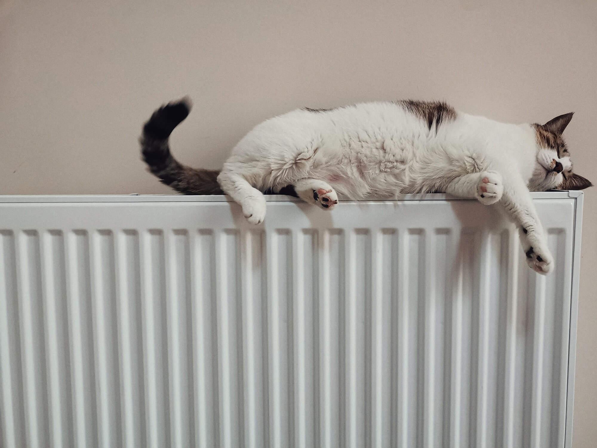 radiateur électrique avec chat qui dort